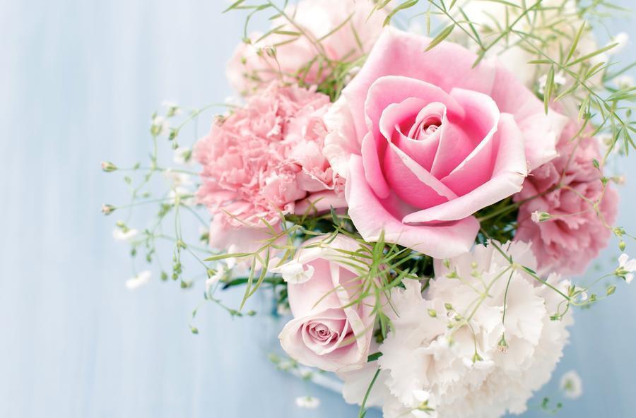 Обои самых живописных цветов Природа, Цветы, Розы, Тюльпаны, Насекомые 1059004098