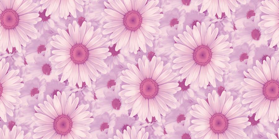 Обои самых живописных цветов Природа, Цветы, Розы, Тюльпаны, Насекомые 653390406