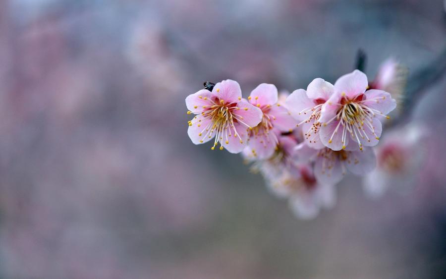 Обои самых живописных цветов Природа, Цветы, Розы, Тюльпаны, Насекомые 1566431664