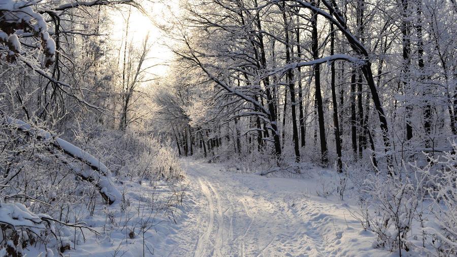 Обои - сказочная Зима - часть 2 Природа, Арт, Зима, Восход, Закат, Лес, Парк, Ночь 1113663975
