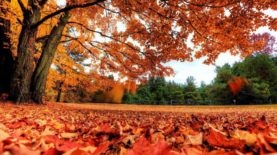 Красивые обои Золотая Осень Природа, Лес, Осень 1918366247