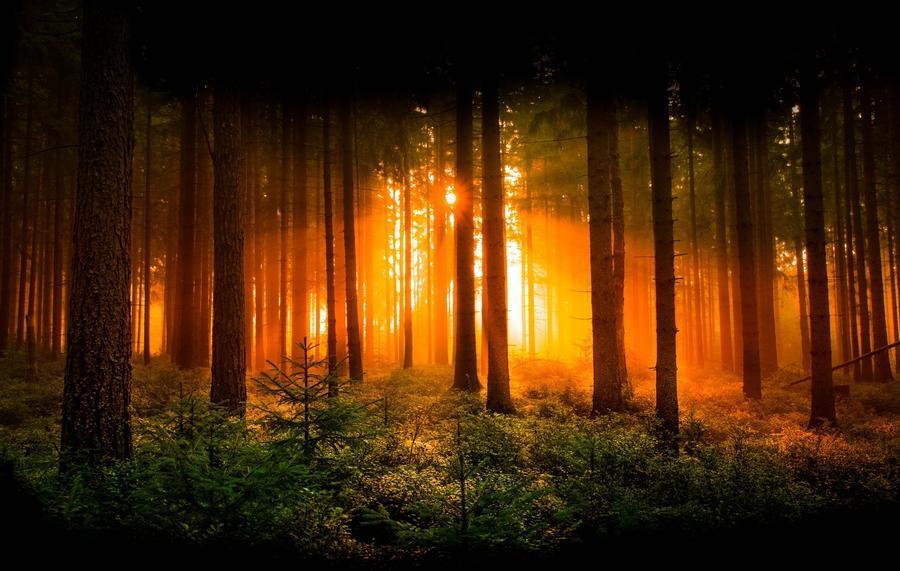 Шпалери загадкових лісів Природа, Ліс, Захід сонця, Схід Сонця id780252106