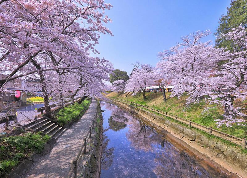 Найновіші Фотошпалери Цвітіння Сакури в Японії Природа, Фотошпалери Цвітіння Сакури, Фотошпалери японської Сакури, Фотошпалери квіти, Фотошпалери Японія id162488260