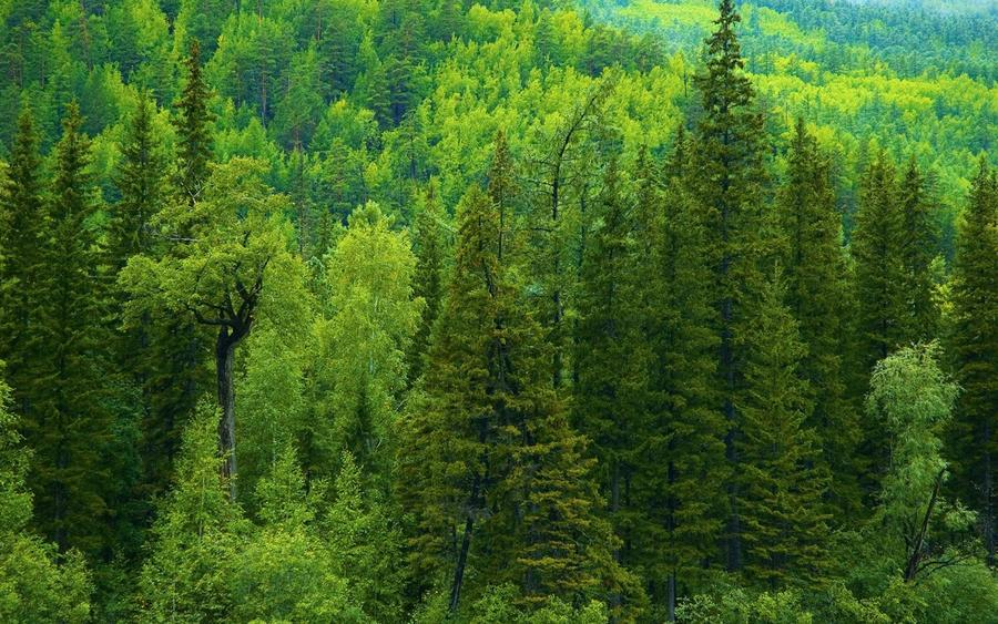 Шпалери - Загадкові Ліси Природа, Арт, Ліс, Ніч, Осінь, Весна, Літо id594147228