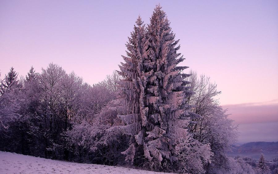Обои загадочных Зимних лесов Природа, Лес, Зима 1417083546