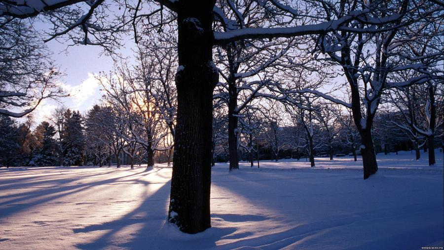 Шпалери чарівних Зимових лісів Природа, Ліс, Зима, Захід сонця, Схід Сонця 1778772301