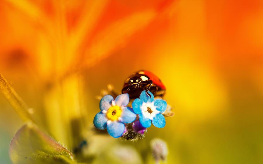 Обои самых живописных цветов Природа, Цветы, Розы, Тюльпаны, Насекомые 1101621503