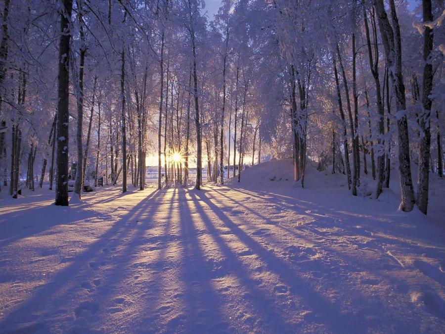 Обои волшебных Зимних лесов Природа, Лес, Зима, Закат, Восход id1198698851