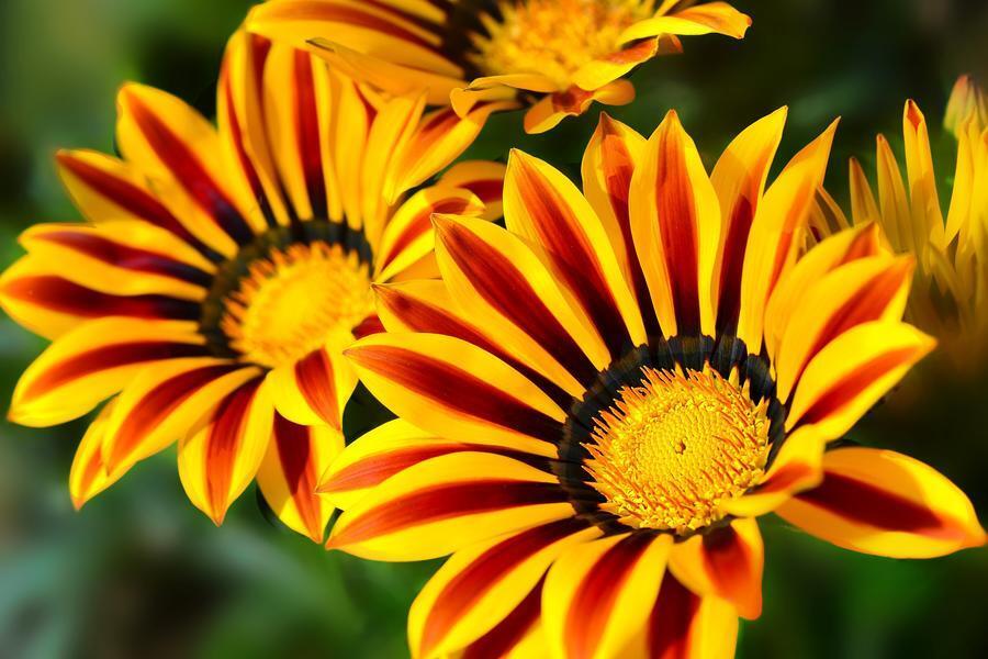Шпалери наймальовничіших квітів Природа, Квіти, Троянди, Тюльпани, Комашки id746659134
