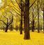 Шпалери - Загадкові Ліси Природа, Арт, Ліс, Ніч, Осінь, Весна, Літо id1116202450