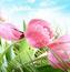Фотошпалери Самих красивих квітів Природа, Квіти, Троянди, Лілія, Вишня 1164787211