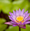 Фотошпалери Самих красивих квітів Природа, Квіти, Троянди, Лілія, Вишня 1764565686