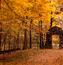 Красивые обои Золотая Осень Природа, Лес, Осень 1651745050