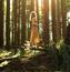 Унікальні шпалери лісових німф Дівчата / Жінки, Природа, Загадкові дівчата, Брюнетки, Блондинки, Руді, Ліс, Німфи id1249849155