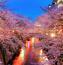 Найновіші Фотошпалери Цвітіння Сакури в Японії Природа, Фотошпалери Цвітіння Сакури, Фотошпалери японської Сакури, Фотошпалери квіти, Фотошпалери Японія id1343974117
