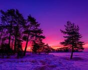 Обои загадочных лесов Природа, Лес, Закат, Восход 2093926074