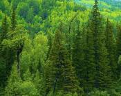Шпалери - Загадкові Ліси Природа, Арт, Ліс, Ніч, Осінь, Весна, Літо 1176996896