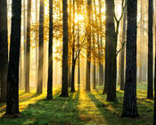 Шпалери - Загадкові Ліси Природа, Арт, Ліс, Ніч, Осінь, Весна, Літо 1817872636