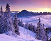 Обои загадочных Зимних лесов Природа, Лес, Зима 288319960