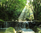 Шпалери казкових водоспадів Природа, Ліс, Водоспади, Захід сонця, Схід Сонця, Джунглі 665101791