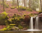 Обои сказочных водопадов Природа, Лес, Водопад, Закат, Восход, Джунгли 2074463937