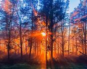 Обои загадочных лесов Природа, Лес, Закат, Восход 355658046