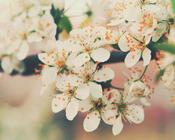Фотошпалери Самих красивих квітів Природа, Квіти, Троянди, Лілія, Вишня 2058801925