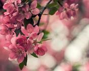 Фотообои Самых красивых цветов Природа, Цветы, Розы, Георгин 1153671776