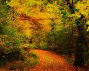 Шпалери - Загадкові Ліси Природа, Арт, Ліс, Ніч, Осінь, Весна, Літо id246958906