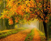 Красивые обои Золотая Осень Природа, Лес, Осень 742916630