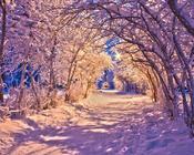 Шпалери на тему - Казкова зима Природа, Зима, Захід сонця, Схід Сонця id1551102064