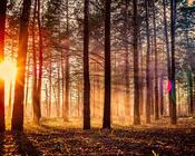 Шпалери загадкових лісів Природа, Ліс, Захід сонця, Схід Сонця id1005289325