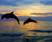 Обои - Загадочные Моря Природа, Море, Восход, Закат, Дельфины, Берег Моря 1742698082