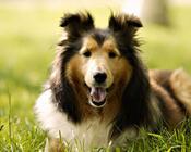 Забавные собачки Природа, Псы, Собачки id1615882814