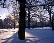 Шпалери загадкових Зимових лісів Природа, Ліс, Зима id921256451