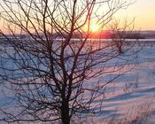 Шпалери загадкових Зимових лісів Природа, Ліс, Зима id1677391132