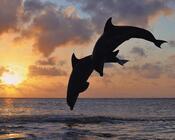 Шпалери - загадкові Моря Природа, Море, Схід Сонця, Захід сонця, Дельфіни, Берег Моря id429643837