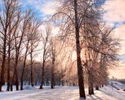 Обои - сказочная Зима - часть 1 Природа, Арт, Зима, Восход, Закат, Лес, Парк, Ночь id1768416062