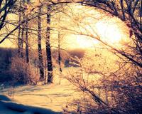 Шпалери - казкова Зима - частина 2 Природа, Арт, Зима, Схід Сонця, Захід сонця, Ліс, Парк, Ніч 1744757326