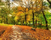 Красивые обои Золотая Осень Природа, Лес, Осень 311751156