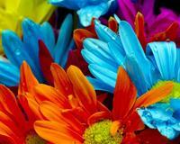 Шпалери наймальовничіших квітів Природа, Квіти, Троянди, Тюльпани, Комашки id2103103132